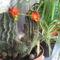 virágaim 010