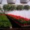 100_1034 Kertészetben
