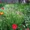 100_1049tavaszi virágok