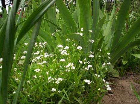 100_1052 Tavaszi virágok
