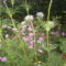 kerámia 503  nyárivirágok