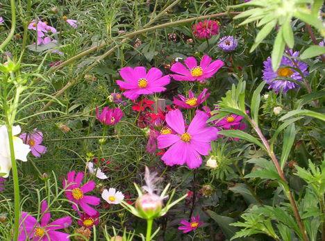 kerámia 504   nyárivirágok