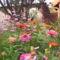 kerámia 505nyári virágrok