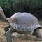 béka teknős