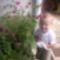 őszirózsa