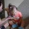 Niki baba és a görcsi baba