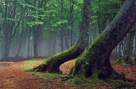 A fák ereje