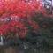 Őszi szinekben.