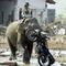 tsunamigalmotor mentő elefánt