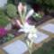 Szülői háu-10-tubarózsa