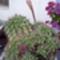 Szülői ház-09-kaktuszóriás