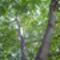 Szülői ház-30-diőfa