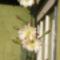 2009. a kaktusz virága