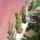 Kozepes_kaktuszok_516810_17798_t