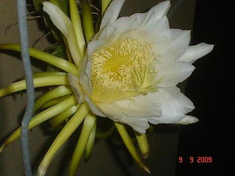 kaktusz 2