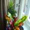 nagyon szépek az idén a virágaim,meglátszik,hogy itthon vagyok