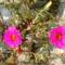 ugye milyen gyönyörü és pedig csak egy egyszerű kis virág