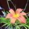Ember nem tud olyat alkotni mint a természet,  ezért nem is festek virágot...