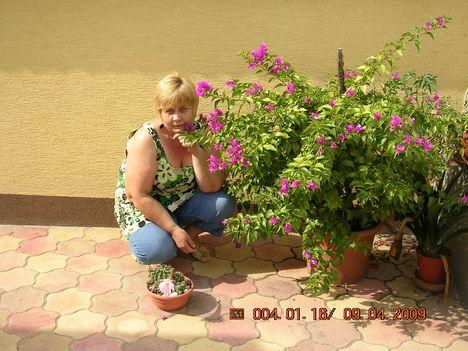 kedvenc virágommal