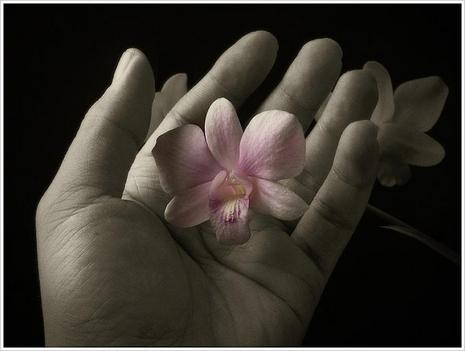 virág a tenyérben