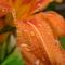 vizcseppes virág