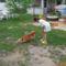 Imádott kiskutyánkkal, Zsömivel.