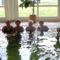 Ceglédi Strand és Gyógyfürdőben az MSZOSZ nyugdijasklubbal 40