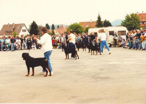 1988 ADK Klub kiállítás