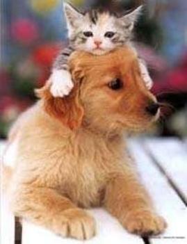 Cica-kutya