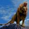 oroszlán11