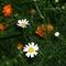 Virágágyás