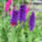 Virág 5