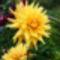 Virág 8