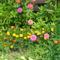 Virág 9