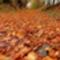 őszi képek5