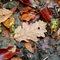 őszi levél 17