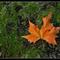 őszi levél 32