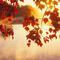 őszi levél 6