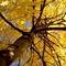 őszi természet17