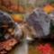őszi természet4