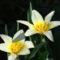 kertem virágai 14