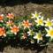 kertem virágai 16