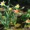 kertem virágai 17