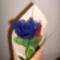 Rózsa-ballagásra