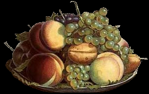 sok gyümölcs,folyadék és mozgás 4