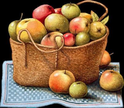 sok gyümölcs,folyadék és mozgás 8