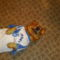 A kis kedvenc Dundi pólóban