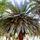 Pálma fák
