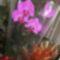 Húgomtól kaptam .- orchidea
