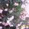 és a rózsaszinü